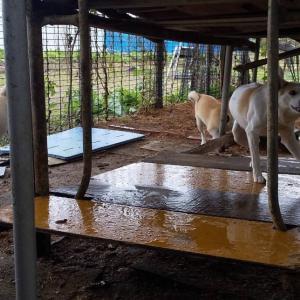 犬13頭多頭飼育崩壊