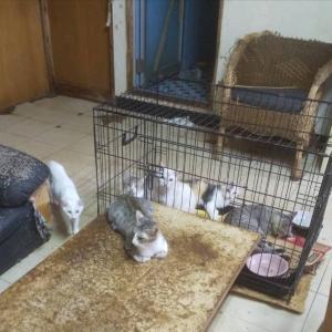 うるま市12頭多頭飼育崩壊