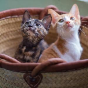 公園に遺棄された子猫たち