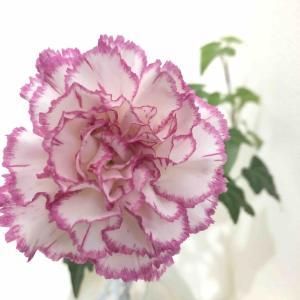 造花と生花、両方飾っている私の感想