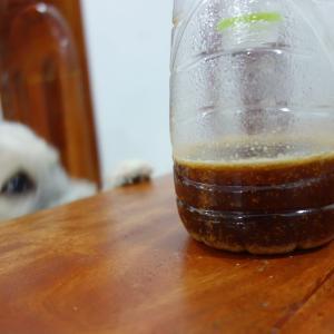 蚊撃退ペットボトルに願いを込めて。