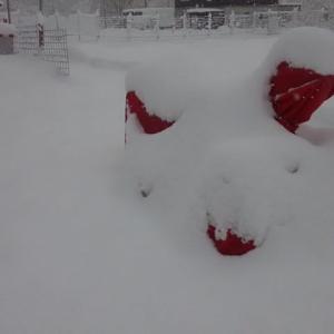 第一回目の雪下ろしとパウダースノーを楽しむ♪