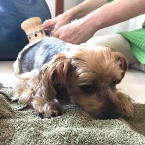 季節の養成 犬の温灸WS