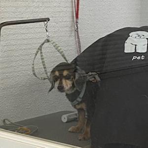 犬の手作り石鹸 はちみつ石鹸完売しました。
