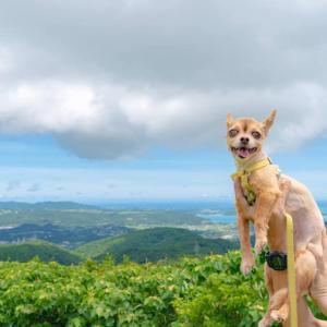 犬とoutdoorを楽しむ
