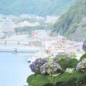 下田紫陽花さんぽ。