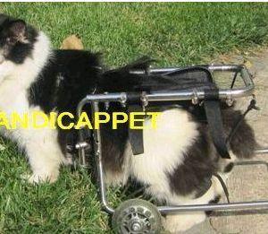 handicappet.net障害ハンディをもった犬・猫,うさぎ,小動物の車イス