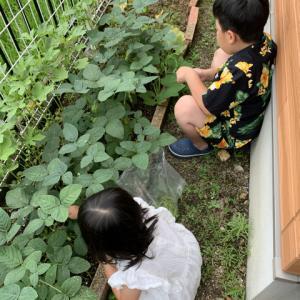収穫第2号〜枝豆大成功〜
