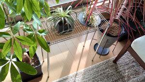植物用のラック