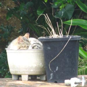 行きたかった場所(2)平和祈念公園で、猫は冬の顔をして。