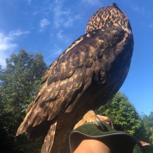 大型フクロウと休日の過ごし方