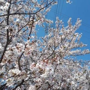 桜と蓮ちゃん