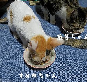 すみれちゃん、ガッツリ、あられ♂ちゃん、ボク食べたくないとか言うてたけど