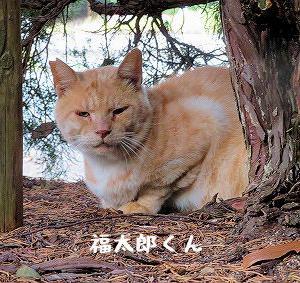 今日は福太郎くん、定位置でご飯待ち
