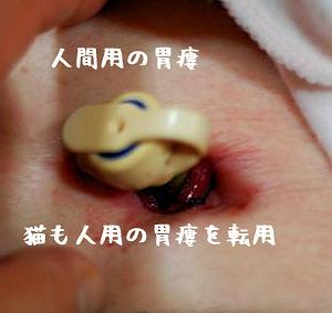 あられ♂ちゃん、チューブが詰まった、明日、胃瘻設置手術します