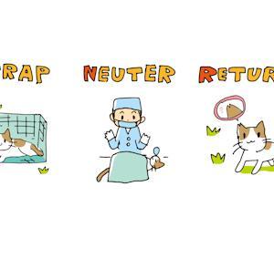 不妊手術、病気猫の治療費支援のお願い