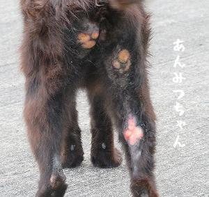 あんみつちゃんの体の傷は何でや、小春ちゃん子猫1にゃん連れているらしい