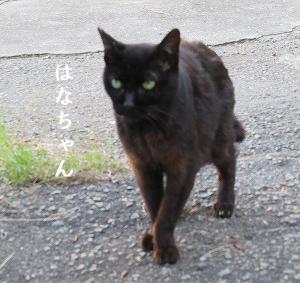 海の黒ちび3兄姉が捨てられてる、お外様の黒猫、何ヶ月ぶりかで会えた