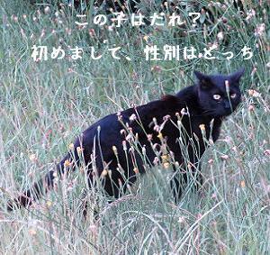 ちょびたんのご飯場に新入り黒猫ちゃんが…。お久にゃんこと会えた