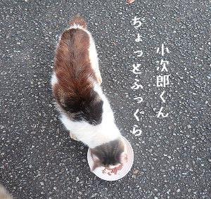 小次郎くん、サンボちゃん、処方食の効果が少し出て来たかな