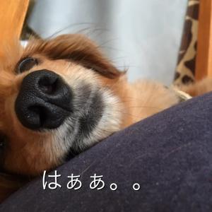 残念だけど予定変更( ^ω^ )