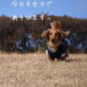 全力で( ^ω^ )
