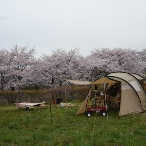 お花見キャンプ( ^ω^ )