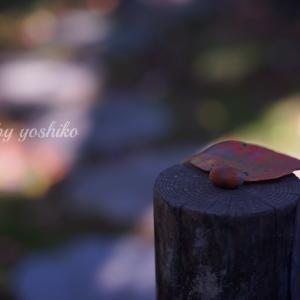 鎌倉♡フォトレッスン、開催してきました♡瞬間瞬間のときめき