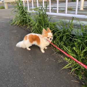 DIY お散歩グッズ入れ おやつお手入れ道具入れ !