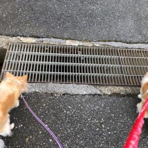 朝夕散歩とセリア10玉 !