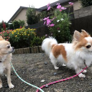 散歩とお出かけ !
