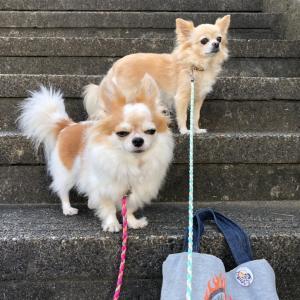 警戒する散歩コース !