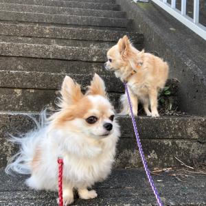 散歩とスモークもくもく !