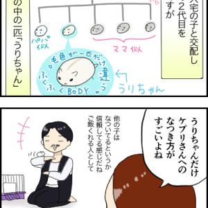 ★生まれかわりハムスター①