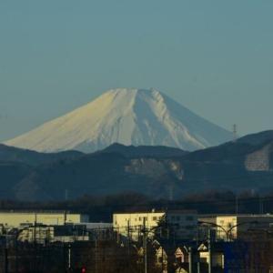 龍之介の日々 ゆく年は富士山でぇと♡(家に来て4280日目)