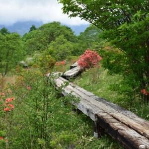 龍之介の日々 珍しい色のレンゲツツジが咲いていたよ♪(家に来て4525日目)