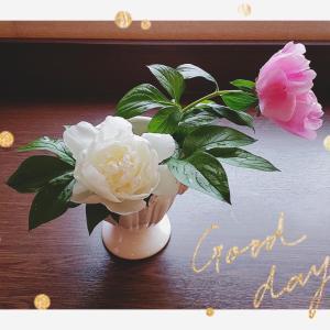 芍薬が咲き始めました〜今年はこぶりになりました新緑や花々が嬉しい季節ですね♪   ...