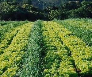 炭素循環農法の詭弁7:チェリー・ピッキング