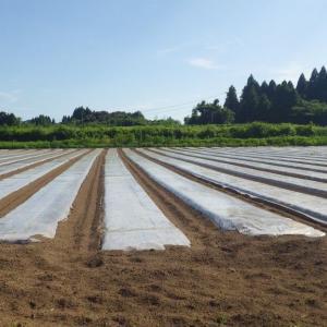 炭素循環農法の矛盾2:太陽熱消毒の奨励