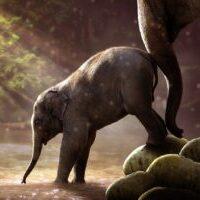 VITRA Eames Elephant 象さんのスツール