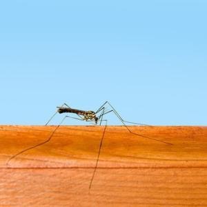あなたの家の、蚊の侵入をシャットアウトする網戸の対策法、間違ってませんか?