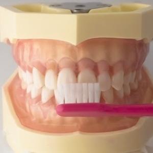 歯みがきに適しているのは本当は食後ではなく、起床直後だそうです