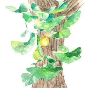 秋の風と光の中で*銀杏の実と葉 vol.225