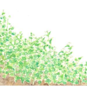 台風に負けるな!*蕎麦の花 vol.228