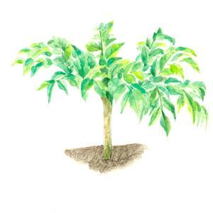 この木何の木、気になる木♪〜*vol.229
