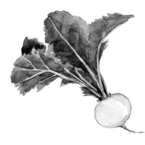 冬の楽しみ*冬野菜 かぶ