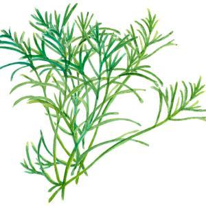 陸の海藻*