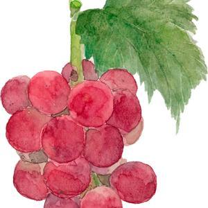 やって来ましたブドウの季節*vol.400