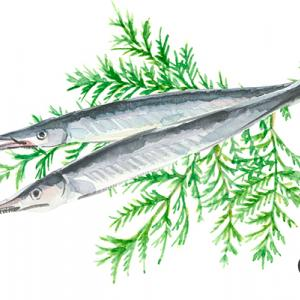 魚介の中の美形ナンバーワン*