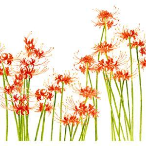 赤い花ならやっぱり曼珠沙華*vol.410
